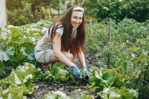 Curso de jardinería SEPE